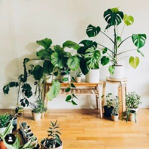 Houseplant bundle! 🔥